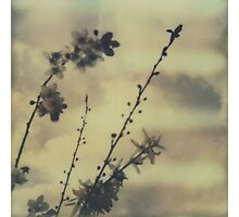 The contrast of flowers Photographic Print