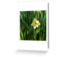 Blooming narcissus in garden at the springtime Greeting Card