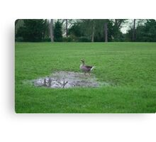 A Goose In A Puddle On A Field Looking Up Canvas Print