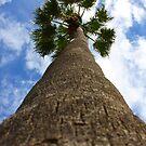 Hello Mr Palm Tree by Tim Bates