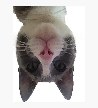 Crazy Gracie Upside Down Kitty Photographic Print