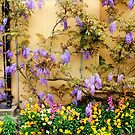 Garden Wall by Vicki Spindler (VHS Photography)