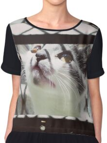 LITTLE CAT PLAYING PHOTOGRAPHY EMEICEA Chiffon Top