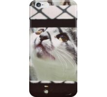 LITTLE CAT PLAYING PHOTOGRAPHY EMEICEA iPhone Case/Skin