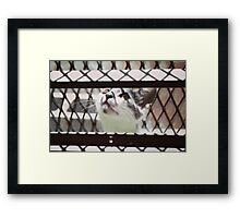 LITTLE CAT PLAYING PHOTOGRAPHY EMEICEA Framed Print