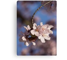 Pink Spring - Sunlit Blossoms and Blue Sky, Vertical Canvas Print
