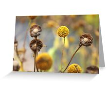 Yellow Wildflowers Greeting Card
