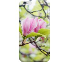 Pink magnolia flowers in spring time iPhone Case/Skin