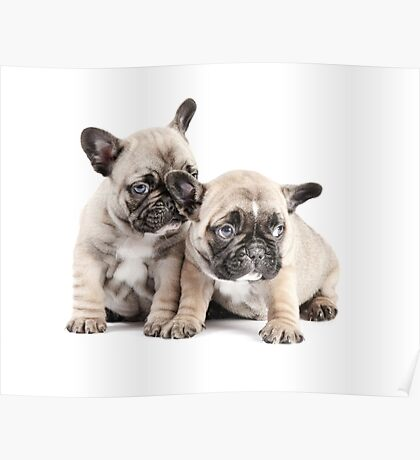 Frenchie Puppy Pals Poster