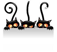 Amusing black cat Photographic Print