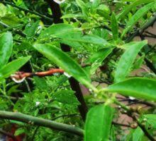 Dew drops on leaves Sticker