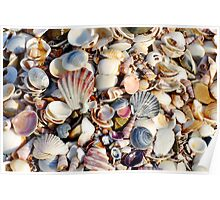Colourful Shells at Beer Barrel Beach Poster