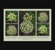 Antelope Horns – Green-Flowered Milkweed – Spider Milkweed One Piece - Short Sleeve