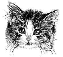 Cartoon purple cat Photographic Print