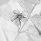 Quietly Beautiful by CarolM