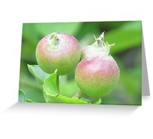 Baby Apples Greeting Card