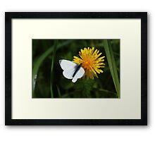 Green veined butterfly Framed Print