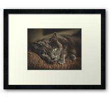 Cat lovers  Framed Print