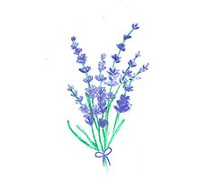 Hand draw flowers of lavender  Photographic Print
