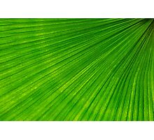 Palm frond Photographic Print