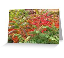 Red and Green Autumn Greeting Card