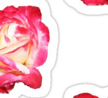 Red Pink and Creme Rose Sticker