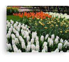 Fire and Ice - Dutch Bulbs in the Keukenhof Gardens Canvas Print