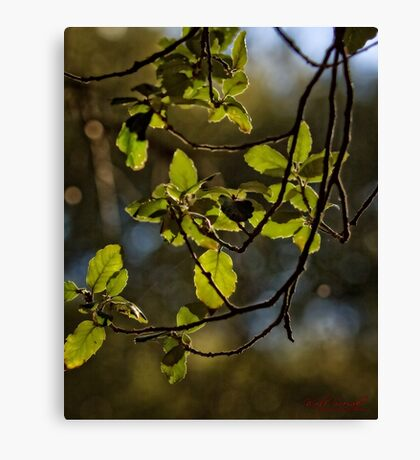 Early Spring at the National Arboretum in Canberra/ACT/Australia (2) Canvas Print