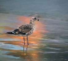 Young seagull at dawn by Celeste Mookherjee