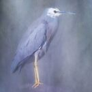 White faced heron by Jan Pudney