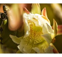 Early Spring at the National Arboretum in Canberra/ACT/Australia (9) Photographic Print