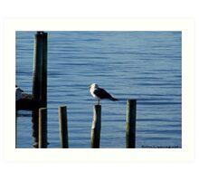 Sea gull on post Art Print