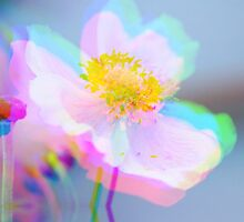 Anemone 3D by RosiLorz