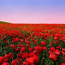 Poppies at sunset by Stephen Frost