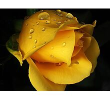 Yellow drops Photographic Print