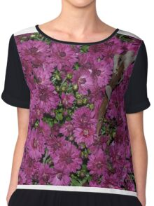 Purple mums in bloom Chiffon Top
