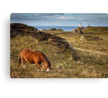 Horse at Llanddwyn Island, Anglesey Canvas Print