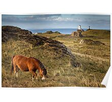Horse at Llanddwyn Island, Anglesey Poster