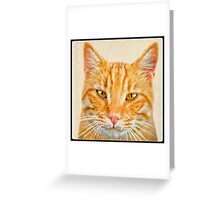 Beautiful ginger cat Greeting Card