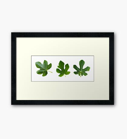 The Leaf Of Fig Tree triptych Framed Print