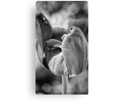 Black and White Spring Tulip Canvas Print
