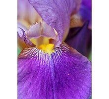 Iris #1 Photographic Print