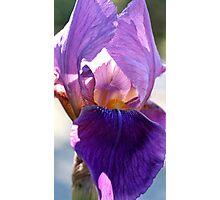 Iris #3 Photographic Print