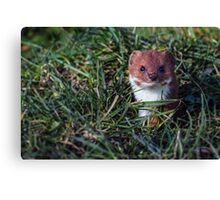 Pop goes the weasel! Canvas Print