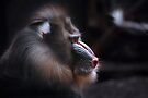 Mandrill Portrait by Andrew Bret Wallis