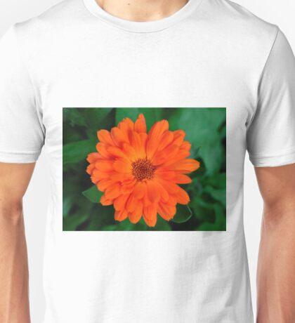 Calendula officinalis Unisex T-Shirt