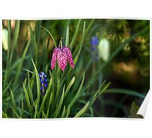 Variegated flowers bell Poster