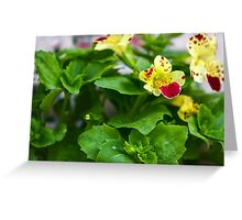 Flowers photographed in nature Greeting Card