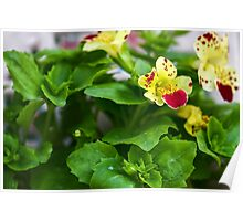 Flowers photographed in nature Poster