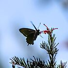 Butterfly by Laurie Puglia
